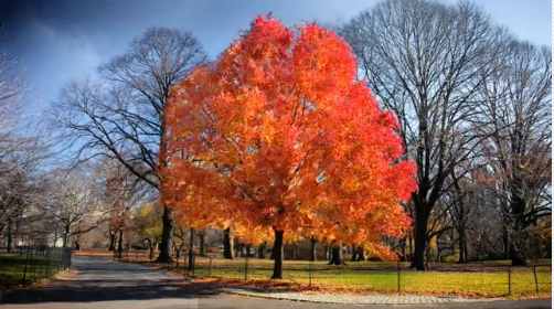 How to capture changing seasons in time-lapse